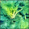 100x100-produits-legumes-epinard-epinard1.jpg